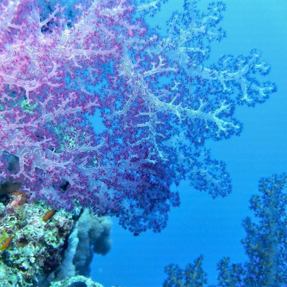 underwater 1268659 1280