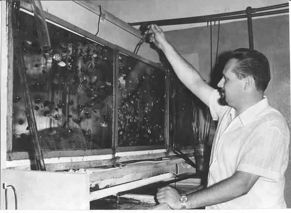 johann wiegandt 1965