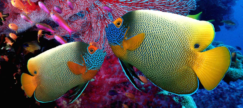 kaiserfische 1000x444 1